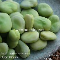 New crop IQF/Frozen peeled broad /fava beans