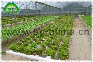 Hydroponics System for Vegetables