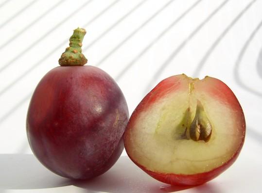 grape seed powder.jpg