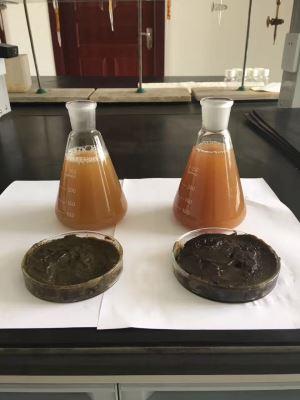 Enzyme Seaweed Extract Liquid